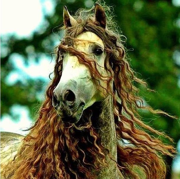 Лошадиный шампунь для волос