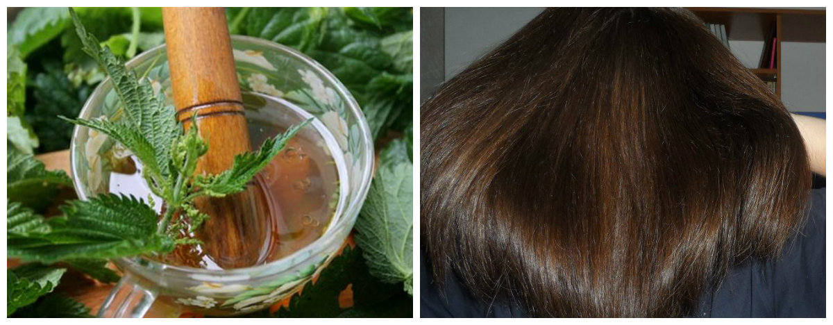 Полезные травы для волос: крапива