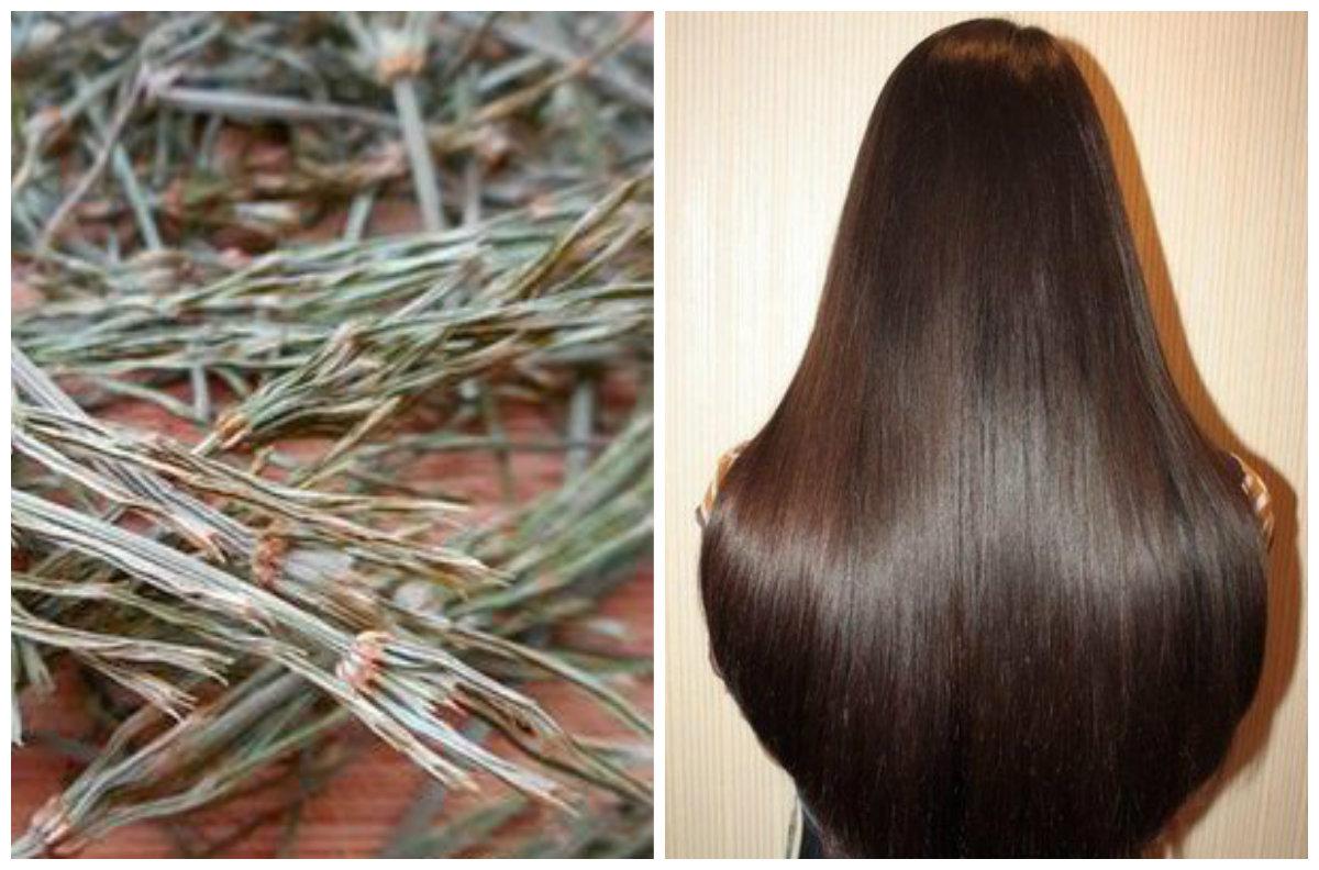 Корень хвоща для волос