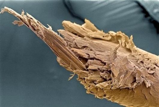 секущиеся кончики под микроскопом